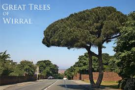 Great Trees of Wirral