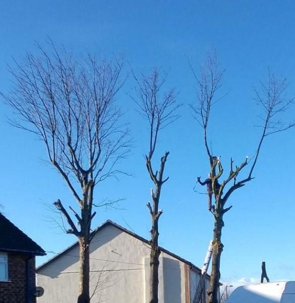 Trees Prenton Hall Rd